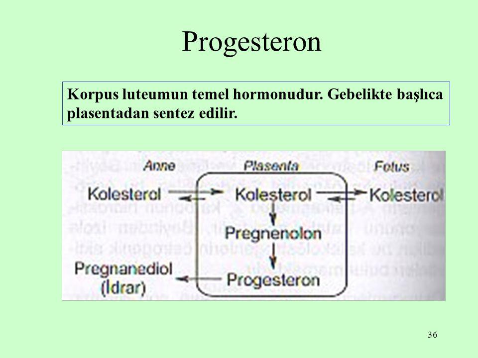 36 Progesteron Korpus luteumun temel hormonudur. Gebelikte başlıca plasentadan sentez edilir.