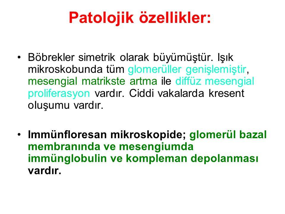 Patolojik özellikler: Böbrekler simetrik olarak büyümüştür.
