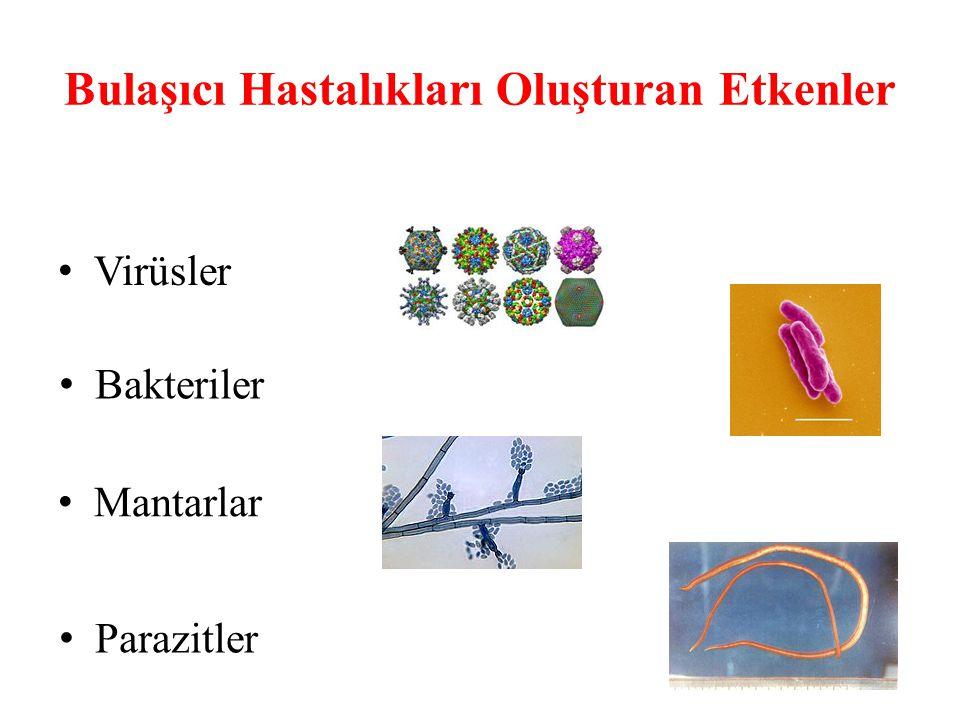 Su ve Besinlerle Bulaşanlar Hepatit A Basilli ve Amipli Dizanteri Kolera