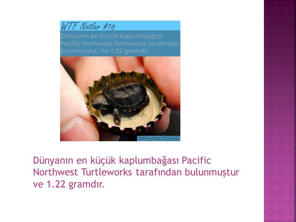 Dünyanın en küçük kaplumbağası Pacific Northwest Turtleworks tarafından bulunmuştur ve 1.22 gramdır.
