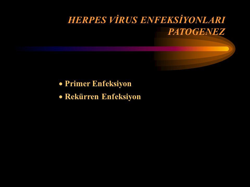  Primer Enfeksiyon  Rekürren Enfeksiyon HERPES VİRUS ENFEKSİYONLARI PATOGENEZ