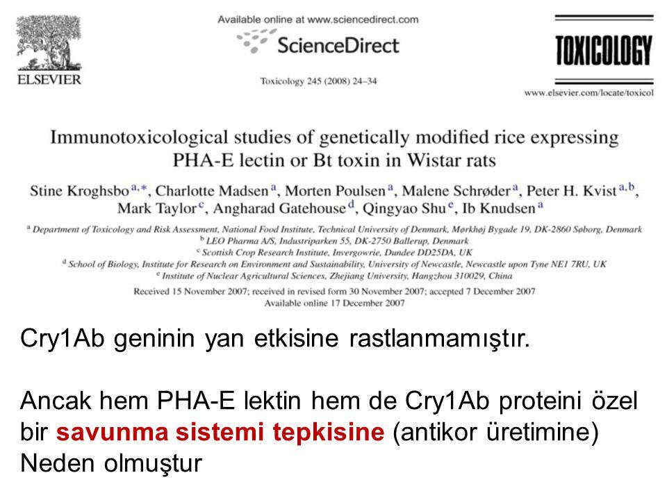 Cry1Ab geninin yan etkisine rastlanmamıştır. Ancak hem PHA-E lektin hem de Cry1Ab proteini özel bir savunma sistemi tepkisine (antikor üretimine) Nede