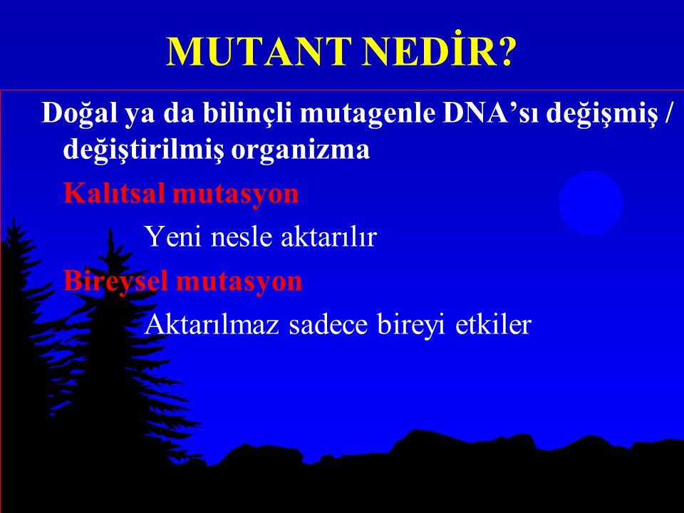 MUTANT NEDİR? Doğal ya da bilinçli mutagenle DNA'sı değişmiş / değiştirilmiş organizma Kalıtsal mutasyon Yeni nesle aktarılır Bireysel mutasyon Aktarı