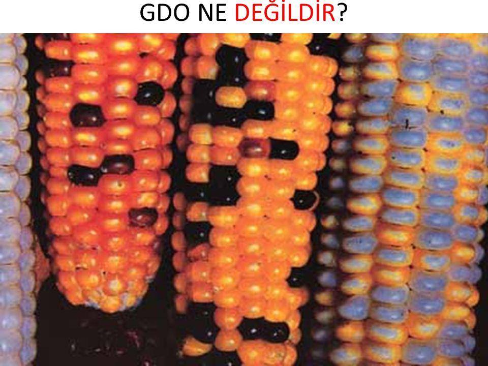Herbisit / Pestisit Dayanıklı GD Bitkilerin Getirdiği Yenilikler Ekonomik faydaların dışında Herbisit / Pestisit kullanımının azalması Kalıntı riskinin azaltılması Herbisit / Pestisite dayanıklı türlerin engellenmesi Uzak türler arası gen transferi çok düşük ihtimal