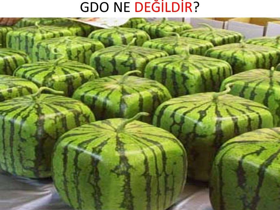 BİLİNEN GDO BUDUR