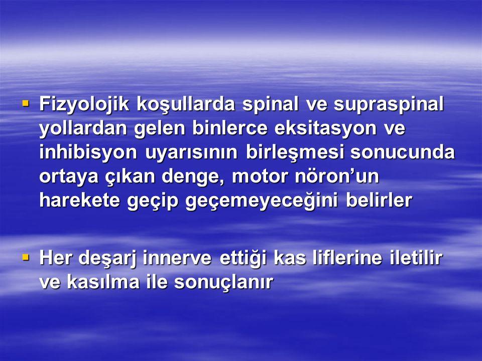  Fizyolojik koşullarda spinal ve supraspinal yollardan gelen binlerce eksitasyon ve inhibisyon uyarısının birleşmesi sonucunda ortaya çıkan denge, mo