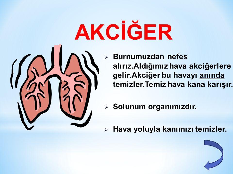  Dolaşım organımızdır.  Kan dolaşımını sağlar.  Tüm vücuda kanı pompalar. KALP