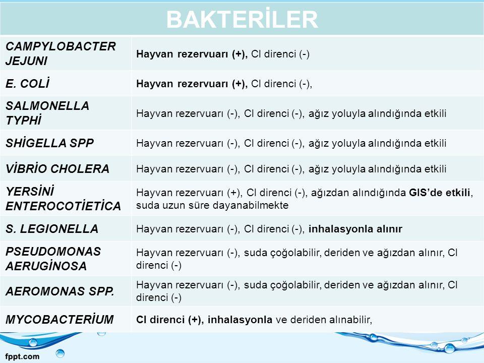 BAKTERİLER CAMPYLOBACTER JEJUNI Hayvan rezervuarı (+), Cl direnci (-) E. COLİ Hayvan rezervuarı (+), Cl direnci (-), SALMONELLA TYPHİ Hayvan rezervuar