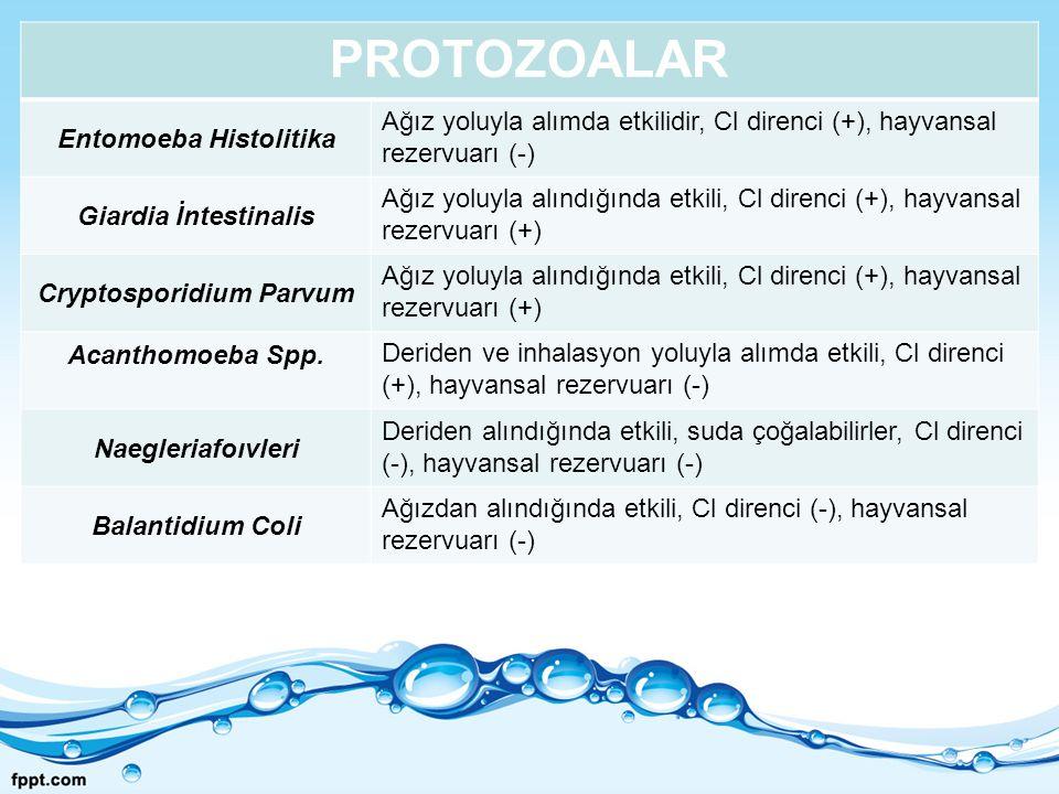 PROTOZOALAR Entomoeba Histolitika Ağız yoluyla alımda etkilidir, Cl direnci (+), hayvansal rezervuarı (-) Giardia İntestinalis Ağız yoluyla alındığınd