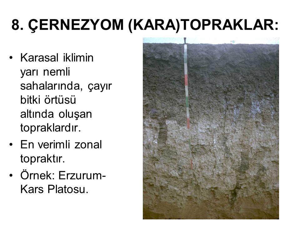 8. ÇERNEZYOM (KARA)TOPRAKLAR: Karasal iklimin yarı nemli sahalarında, çayır bitki örtüsü altında oluşan topraklardır. En verimli zonal topraktır. Örne