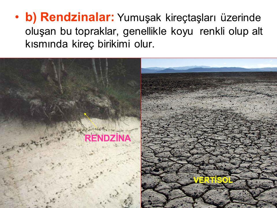 b) Rendzinalar: Yumuşak kireçtaşları üzerinde oluşan bu topraklar, genellikle koyu renkli olup alt kısmında kireç birikimi olur. RENDZİNA VERTİSOL