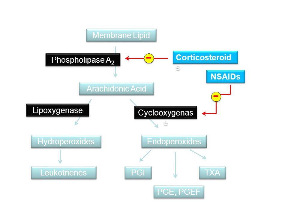 Membrane Lipid Arachidonic Acid Phospholipase A 2 Endoperoxides Hydroperoxides TXA PGE, PGEF PGI Leukotrienes Cyclooxygenas e Lipoxygenase - Corticost