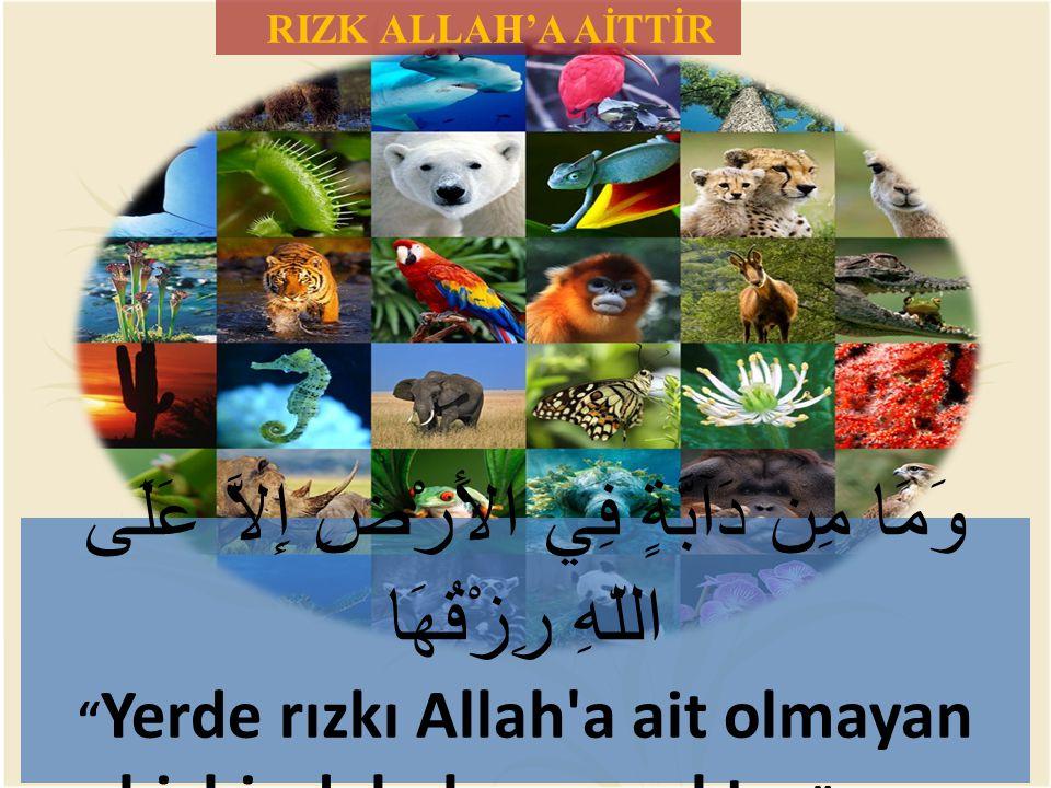 """RIZK ALLAH'A AİTTİR وَمَا مِن دَآبَّةٍ فِي الأَرْضِ إِلاَّ عَلَى اللّهِ رِزْقُهَا """" Yerde rızkı Allah'a ait olmayan hiçbir debelenen yoktur """" (Hud, 11"""