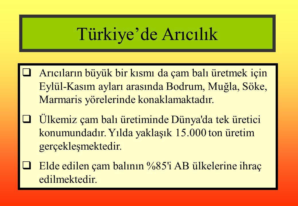Türkiye'de Arıcılık  Arıcıların büyük bir kısmı da çam balı üretmek için Eylül-Kasım ayları arasında Bodrum, Muğla, Söke, Marmaris yörelerinde konakl