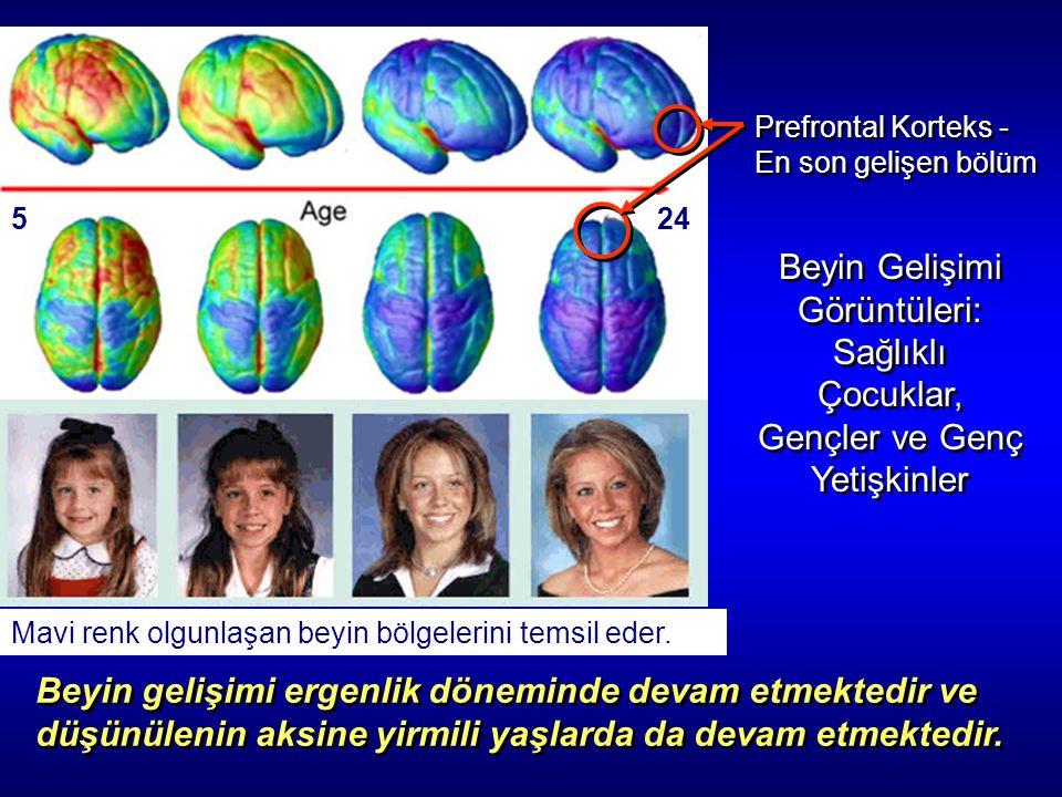 245 Prefrontal Korteks - En son gelişen bölüm Prefrontal Korteks - En son gelişen bölüm Mavi renk olgunlaşan beyin bölgelerini temsil eder. Beyin Geli