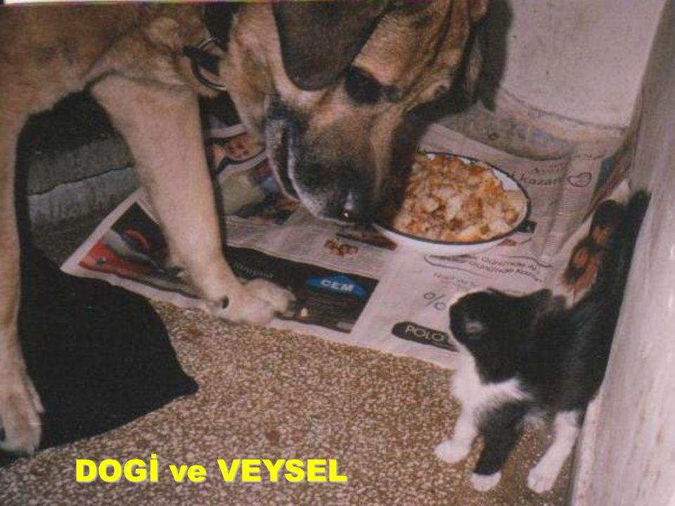 DOGİ ve VEYSEL