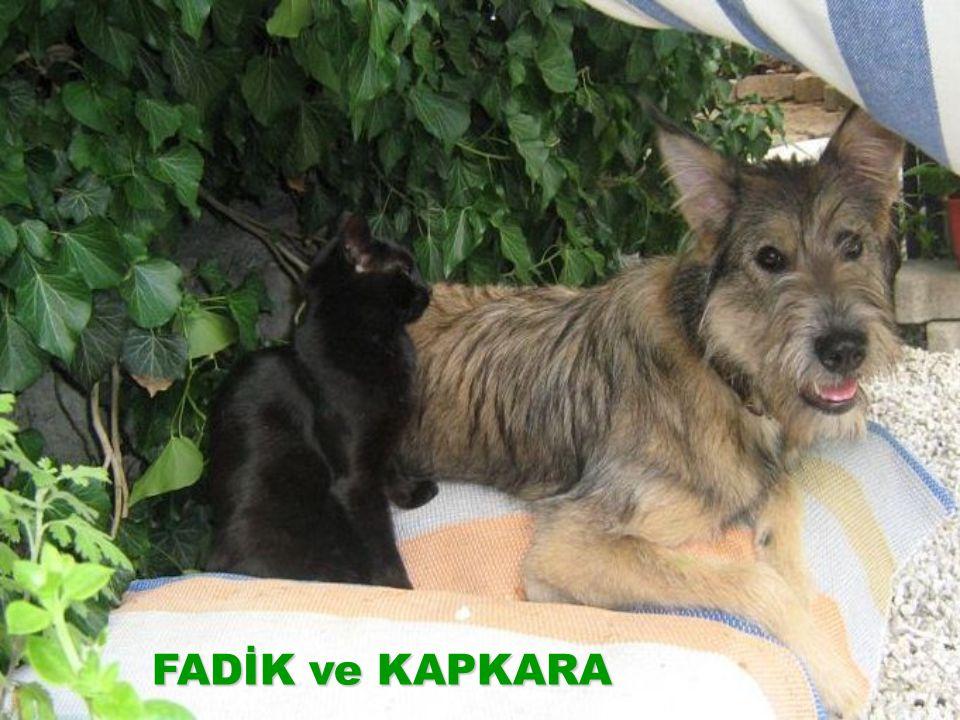 FADİK ve KAPKARA