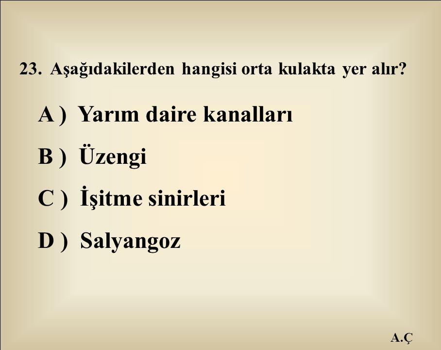 A.Ç 23. Aşağıdakilerden hangisi orta kulakta yer alır? A ) Yarım daire kanalları B ) Üzengi C ) İşitme sinirleri D ) Salyangoz