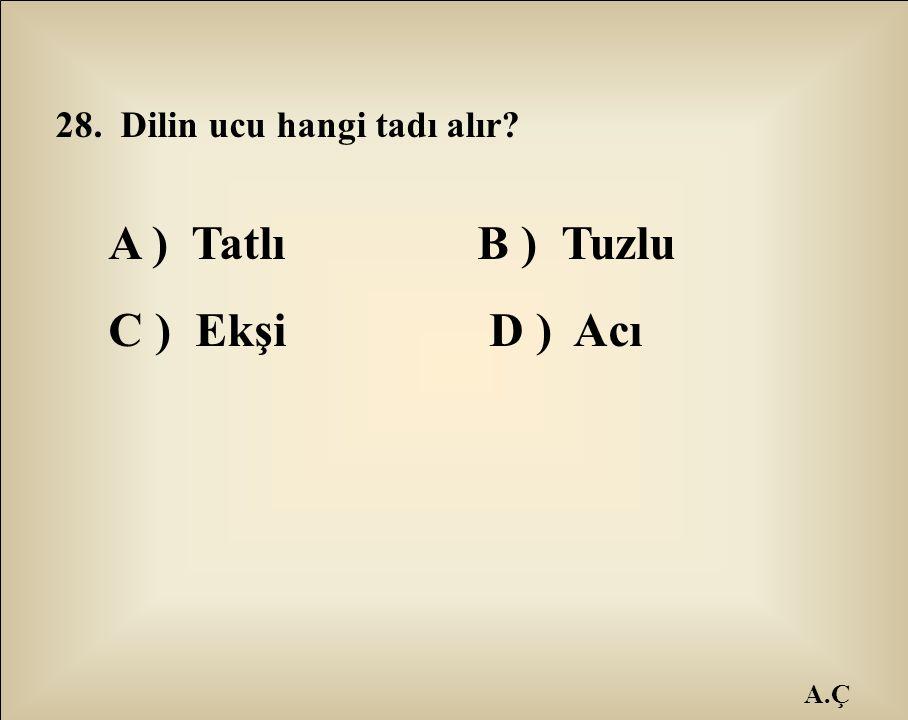 A.Ç 28. Dilin ucu hangi tadı alır? A ) Tatlı B ) Tuzlu C ) Ekşi D ) Acı