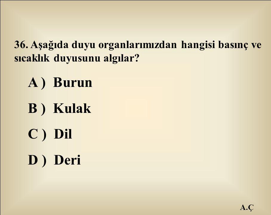 A.Ç 36. Aşağıda duyu organlarımızdan hangisi basınç ve sıcaklık duyusunu algılar? A ) Burun B ) Kulak C ) Dil D ) Deri