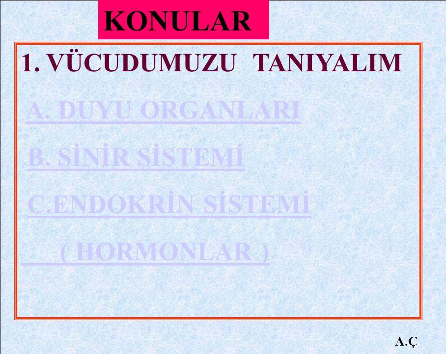 A.Ç 18.
