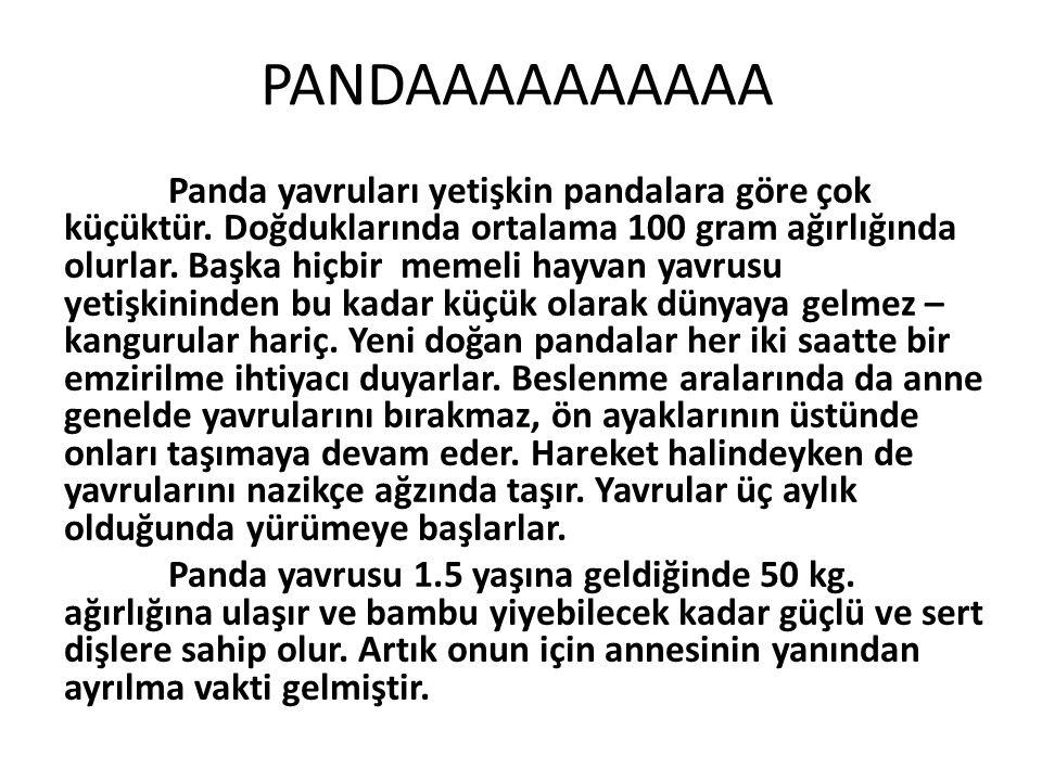 PANDAAAAAAAAAA Panda yavruları yetişkin pandalara göre çok küçüktür. Doğduklarında ortalama 100 gram ağırlığında olurlar. Başka hiçbir memeli hayvan y