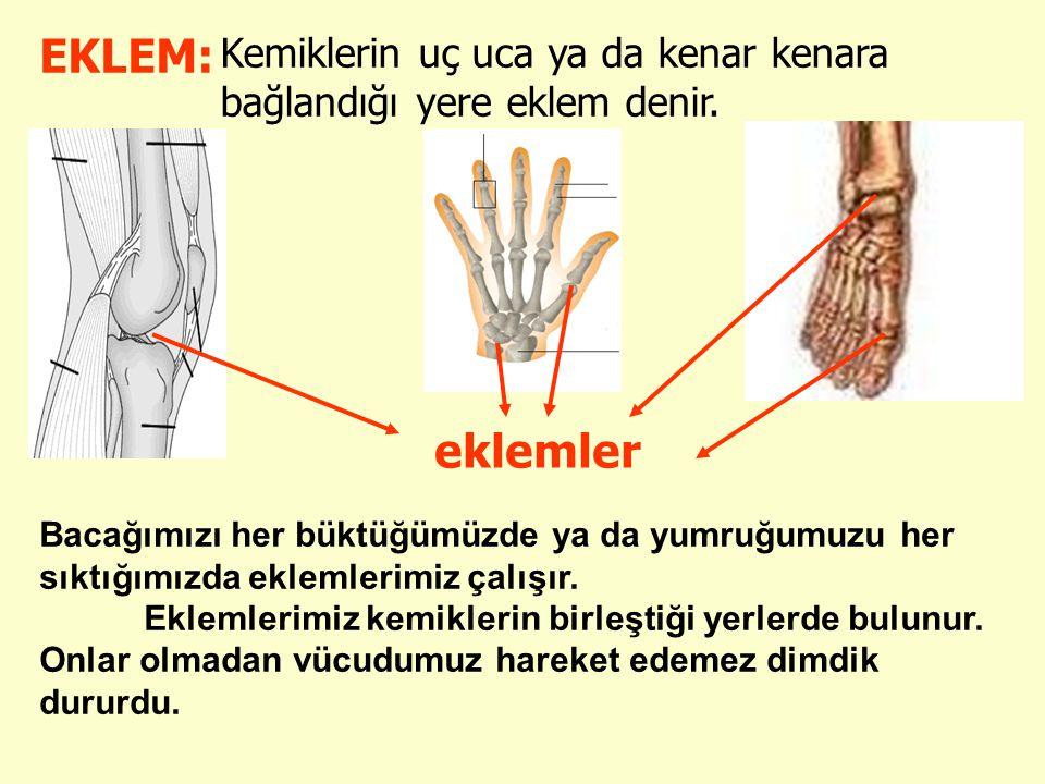 EKLEM: Kemiklerin uç uca ya da kenar kenara bağlandığı yere eklem denir. eklemler Bacağımızı her büktüğümüzde ya da yumruğumuzu her sıktığımızda eklem