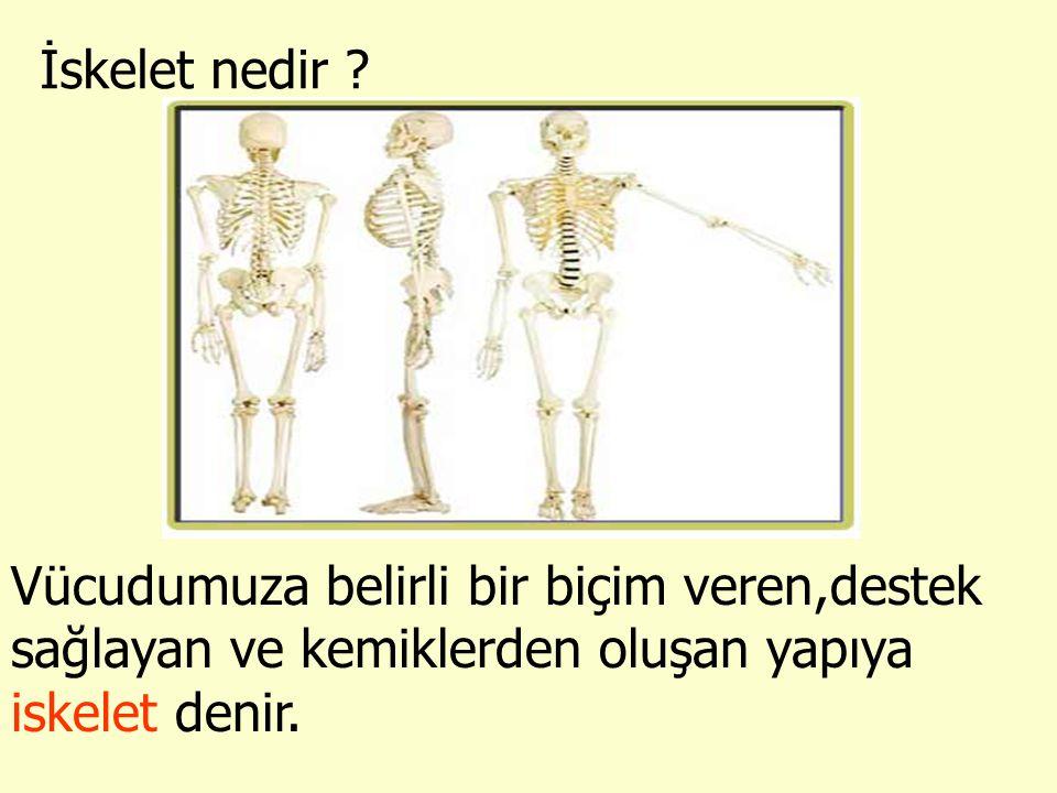 İskelet nedir ? Vücudumuza belirli bir biçim veren,destek sağlayan ve kemiklerden oluşan yapıya iskelet denir.