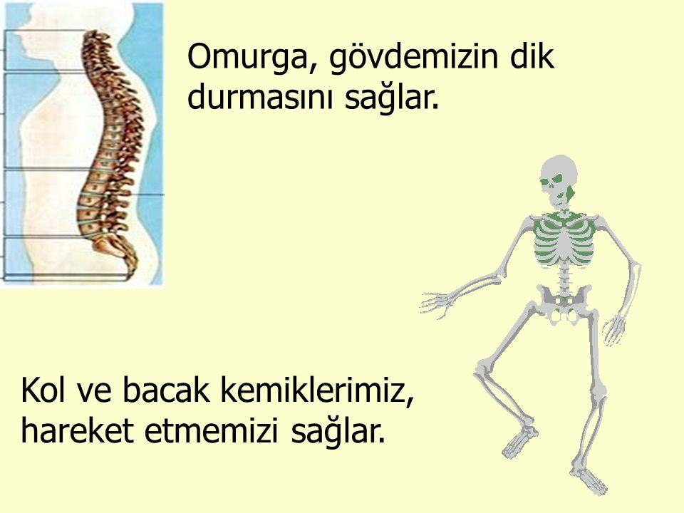 Omurga, gövdemizin dik durmasını sağlar. Kol ve bacak kemiklerimiz, hareket etmemizi sağlar.