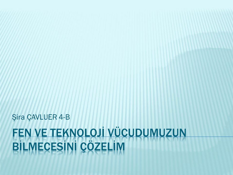 Şira ÇAVLUER 4-B