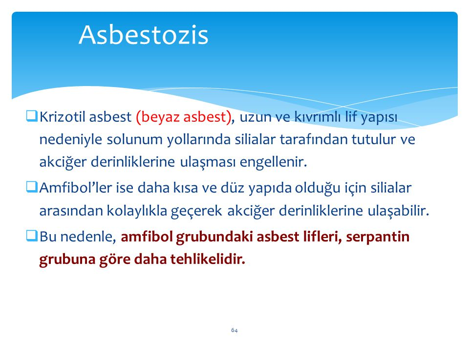  Krizotil asbest (beyaz asbest), uzun ve kıvrımlı lif yapısı nedeniyle solunum yollarında silialar tarafından tutulur ve akciğer derinliklerine ulaşm