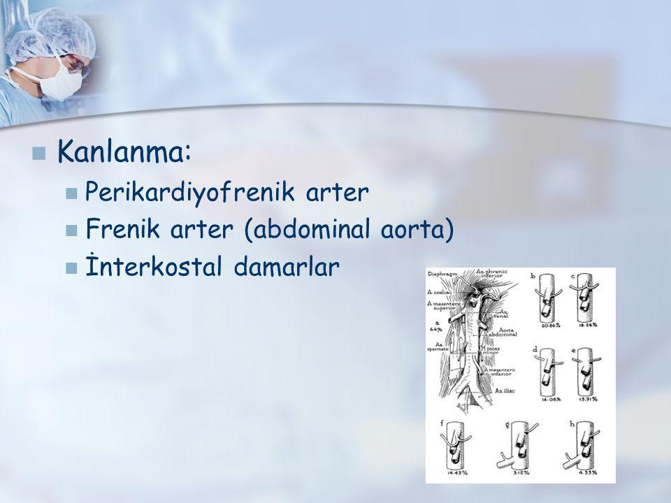 Kanlanma: Perikardiyofrenik arter Frenik arter (abdominal aorta) İnterkostal damarlar