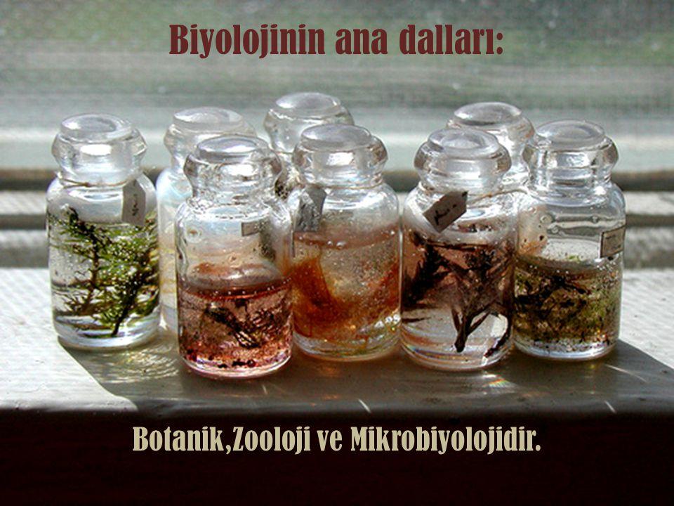 Biyolojinin ana dalları: Botanik,Zooloji ve Mikrobiyolojidir.