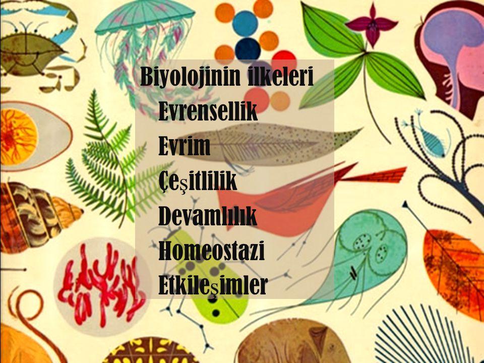 Çalı ş ma alanları Hayatın yapısı Organizmaların fizyolojisi Organizmaların çe ş itlili ğ i ve evrimi Hayatın sınıflandırılması Organizmaların etkile ş imleri report this entry