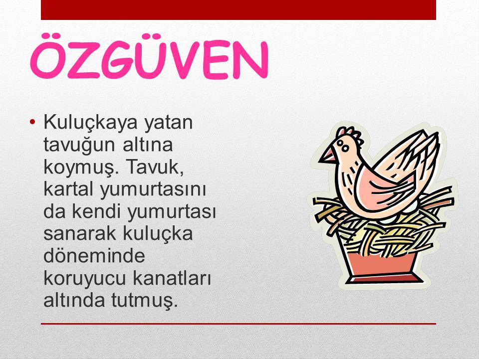 ÖZGÜVEN Kuluçkaya yatan tavuğun altına koymuş. Tavuk, kartal yumurtasını da kendi yumurtası sanarak kuluçka döneminde koruyucu kanatları altında tutmu