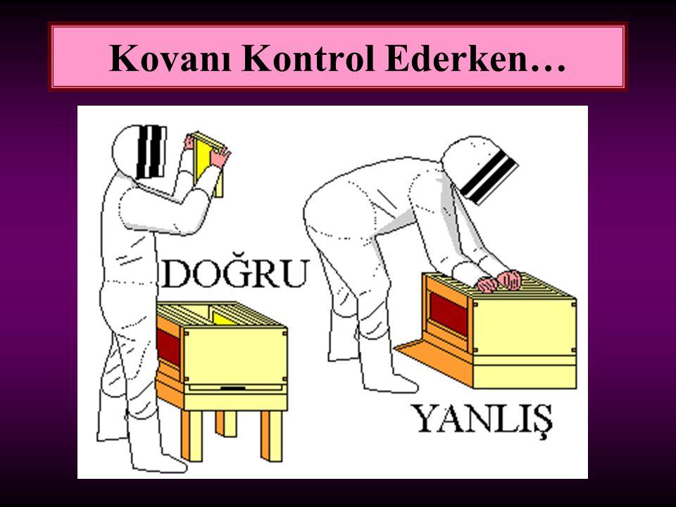 Kovanı Kontrol Ederken…