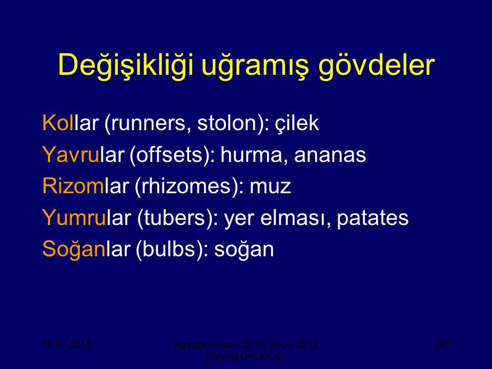 Değişikliği uğramış gövdeler Kollar (runners, stolon): çilek Yavrular (offsets): hurma, ananas Rizomlar (rhizomes): muz Yumrular (tubers): yer elması,