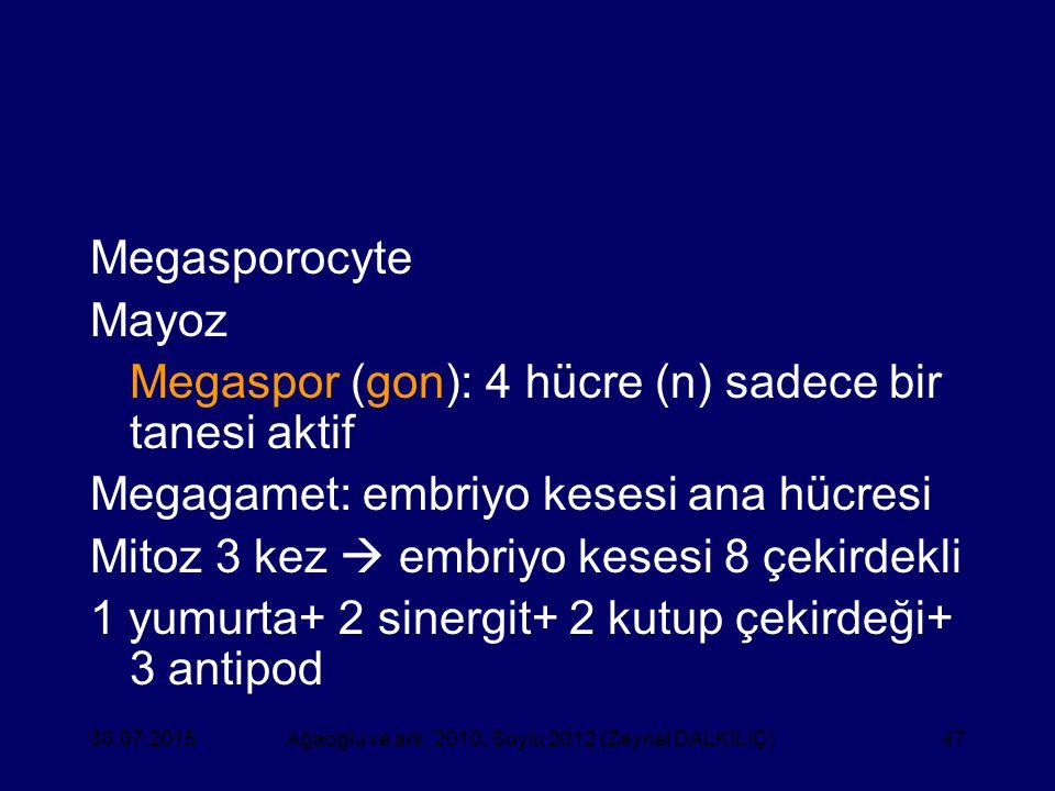 47 Megasporocyte Mayoz Megaspor (gon): 4 hücre (n) sadece bir tanesi aktif Megagamet: embriyo kesesi ana hücresi Mitoz 3 kez  embriyo kesesi 8 çekird