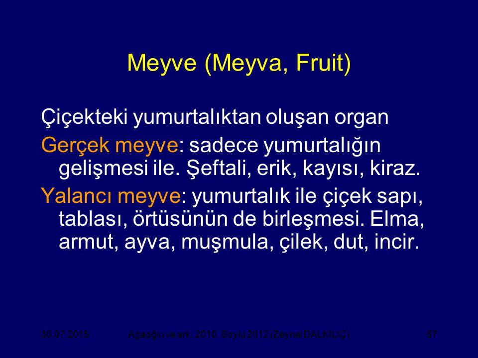 57 Meyve (Meyva, Fruit) Çiçekteki yumurtalıktan oluşan organ Gerçek meyve: sadece yumurtalığın gelişmesi ile. Şeftali, erik, kayısı, kiraz. Yalancı me