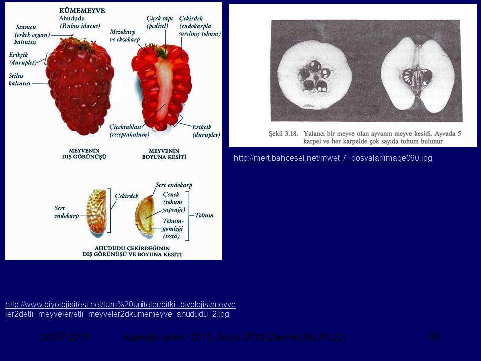 30.07.2015Ağaoğlu ve ark. 2010, Soylu 2012 (Zeynel DALKILIÇ)59 http://www.biyolojisitesi.net/tum%20uniteler/bitki_biyolojisi/meyve ler2detli_meyveler/