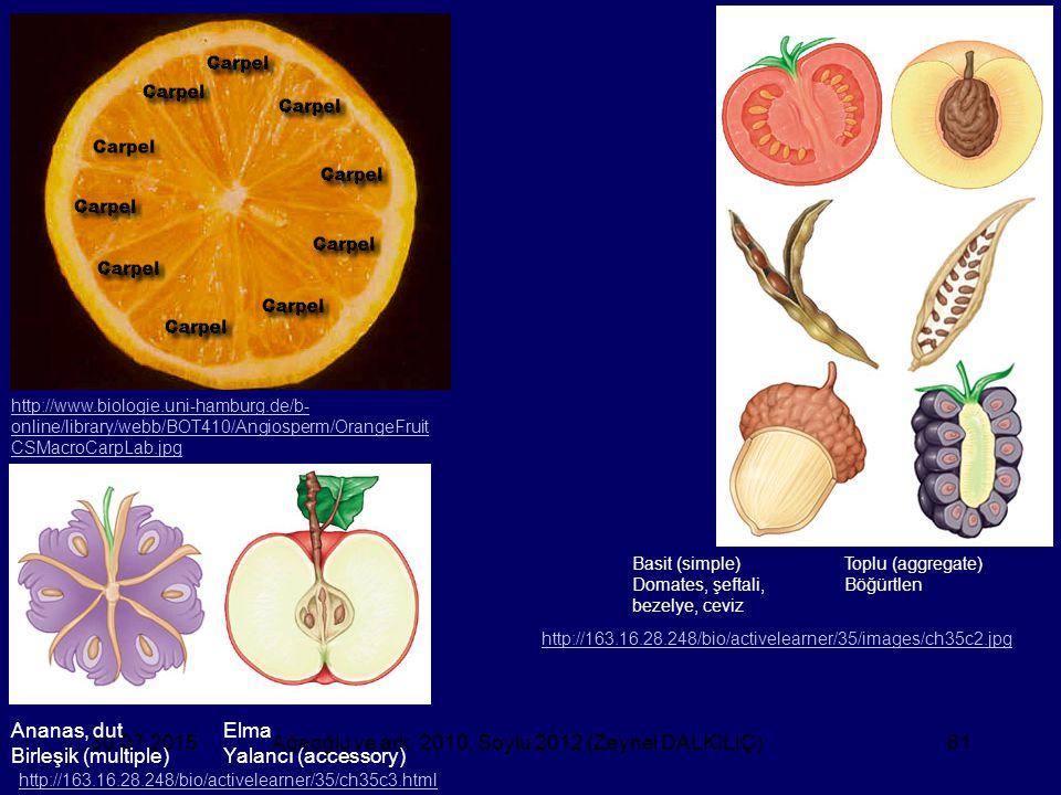 Ağaoğlu ve ark. 2010, Soylu 2012 (Zeynel DALKILIÇ)61 http://www.biologie.uni-hamburg.de/b- online/library/webb/BOT410/Angiosperm/OrangeFruit CSMacroCa