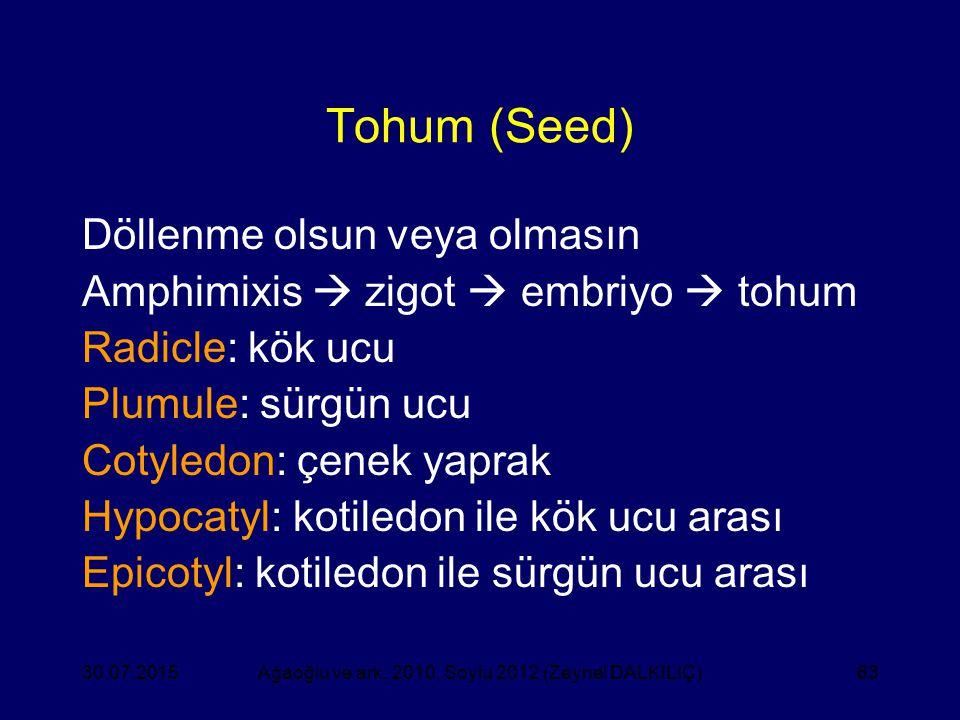 63 Tohum (Seed) Döllenme olsun veya olmasın Amphimixis  zigot  embriyo  tohum Radicle: kök ucu Plumule: sürgün ucu Cotyledon: çenek yaprak Hypocaty
