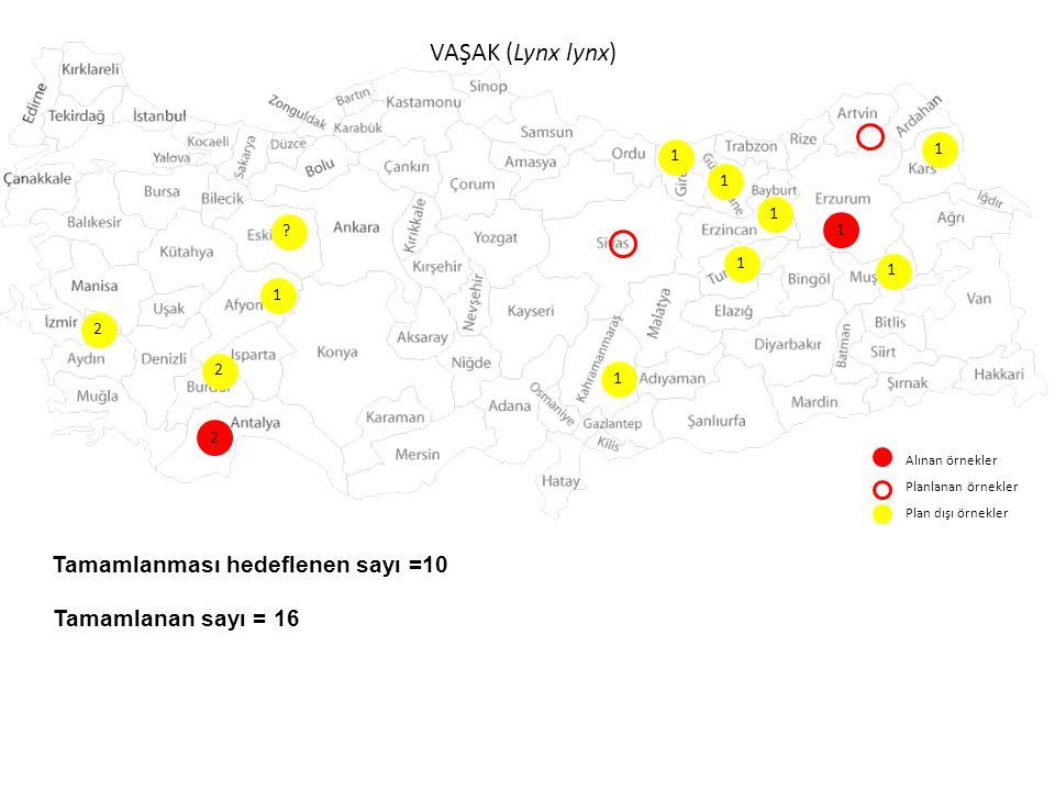 VAŞAK (Lynx lynx) Alınan örnekler Planlanan örnekler Plan dışı örnekler 1 1 1 ? 1 1 Tamamlanması hedeflenen sayı =10 Tamamlanan sayı = 16 1 2 2 2 1 1