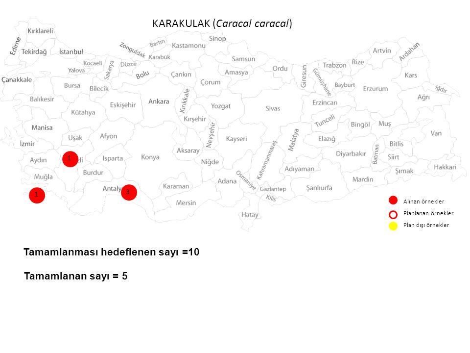 KARAKULAK (Caracal caracal) Alınan örnekler Planlanan örnekler Plan dışı örnekler 1 1 3 Tamamlanması hedeflenen sayı =10 Tamamlanan sayı = 5