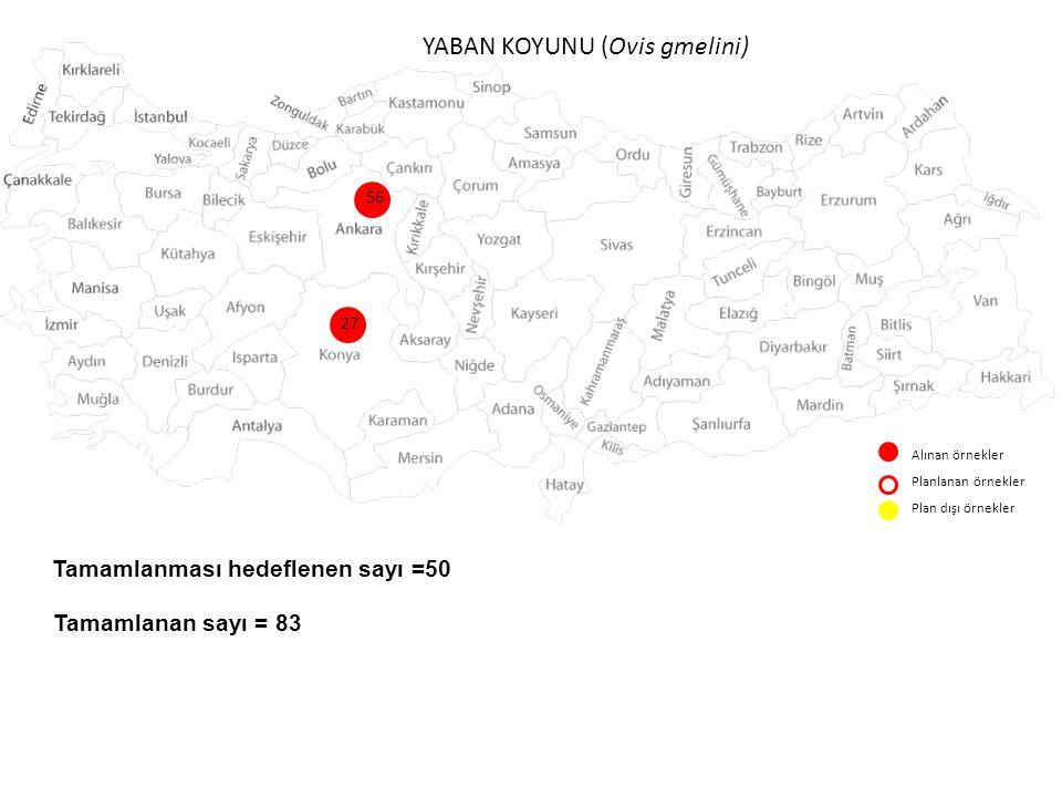 YABAN KEÇİSİ (Capra aegagrus) Alınan örnekler Planlanan örnekler Plan dışı örnekler 6 30 18 9 3 3 11 13 1 6 3 1 5 1 tur Tamamlanması hedeflenen sayı =100-120 Tamamlanan sayı = 113 2 1