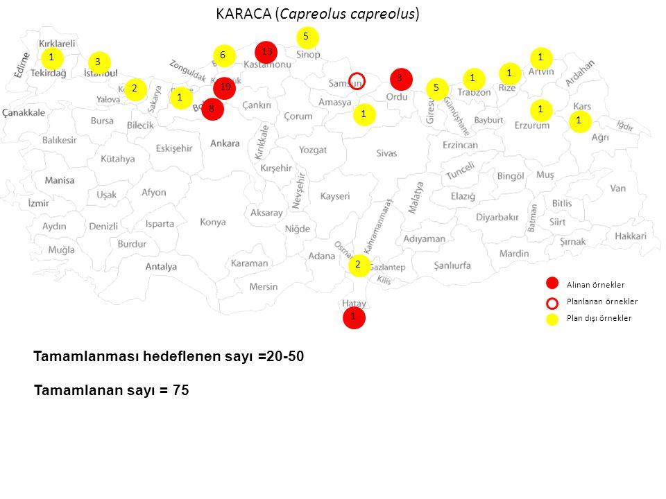 KARACA (Capreolus capreolus) Alınan örnekler Planlanan örnekler Plan dışı örnekler 3 13 8 6 19 2 1 1 1 1 5 1 5 2 3 Tamamlanması hedeflenen sayı =20-50