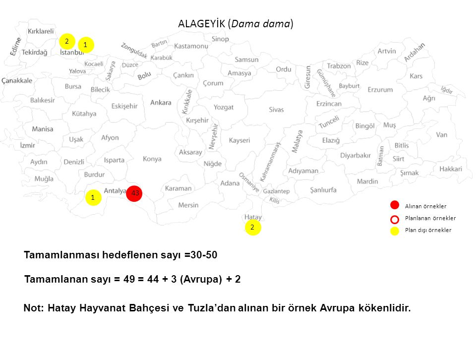 KIZILGEYİK (Cervus elaphus) Alınan örnekler Planlanan örnekler Plan dışı örnekler 38 1 2 2 5 10 4 8 7 23 1 4 Tamamlanması hedeflenen sayı =60 Tamamlanan sayı = 117 (İstanbul içindeki 5 örnek İstanbul'dan Bursa'ya salınan örneklerdir) 12