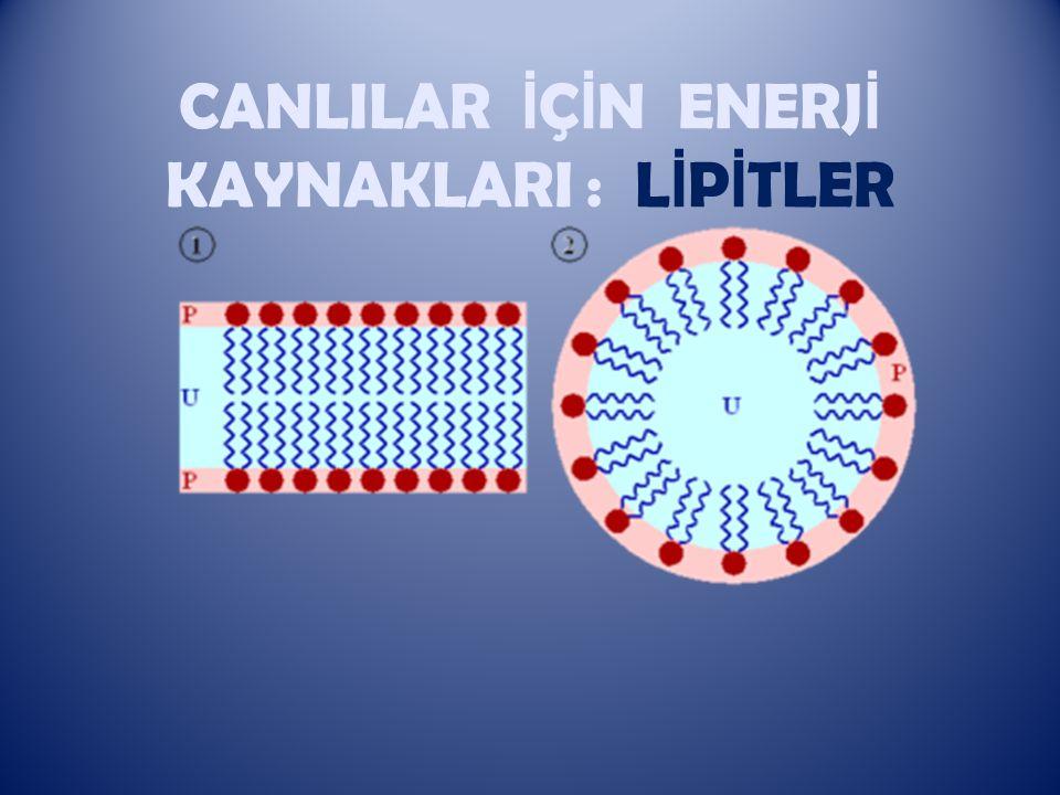 L İ P İ TLER Dünyadaki canlılardaki temel organik bileşiklerden biri de lipitlerdir.