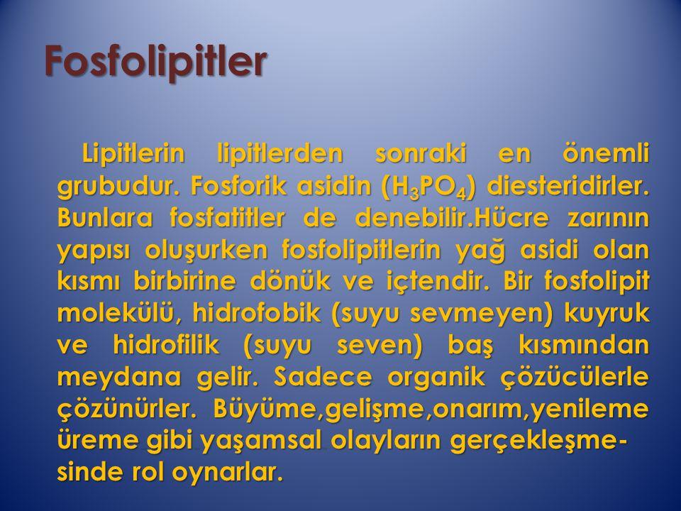 Fosfolipitler Fosfolipitler Lipitlerin lipitlerden sonraki en önemli grubudur. Fosforik asidin (H 3 PO 4 ) diesteridirler. Bunlara fosfatitler de dene