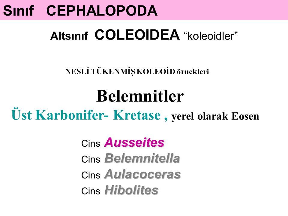 Sınıf CEPHALOPODA Altsınıf COLEOIDEA koleoidler NESLİ TÜKENMİŞ KOLEOİD örnekleri Ausseites Cins Ausseites Belemnitella Cins Belemnitella Aulacoceras Cins Aulacoceras Hibolites Cins Hibolites Belemnitler Üst Karbonifer- Kretase, yerel olarak Eosen